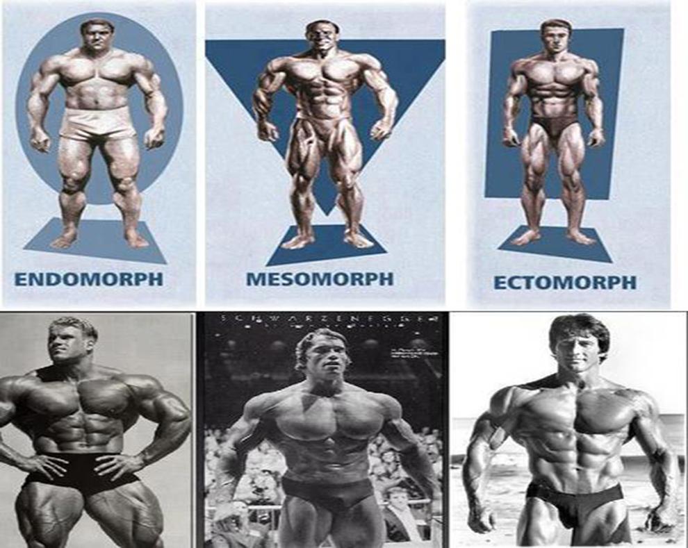 гено-тип-мезоморф-ектоморф-ендоморф-телосложение