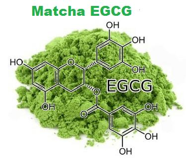 Matcha EGCG