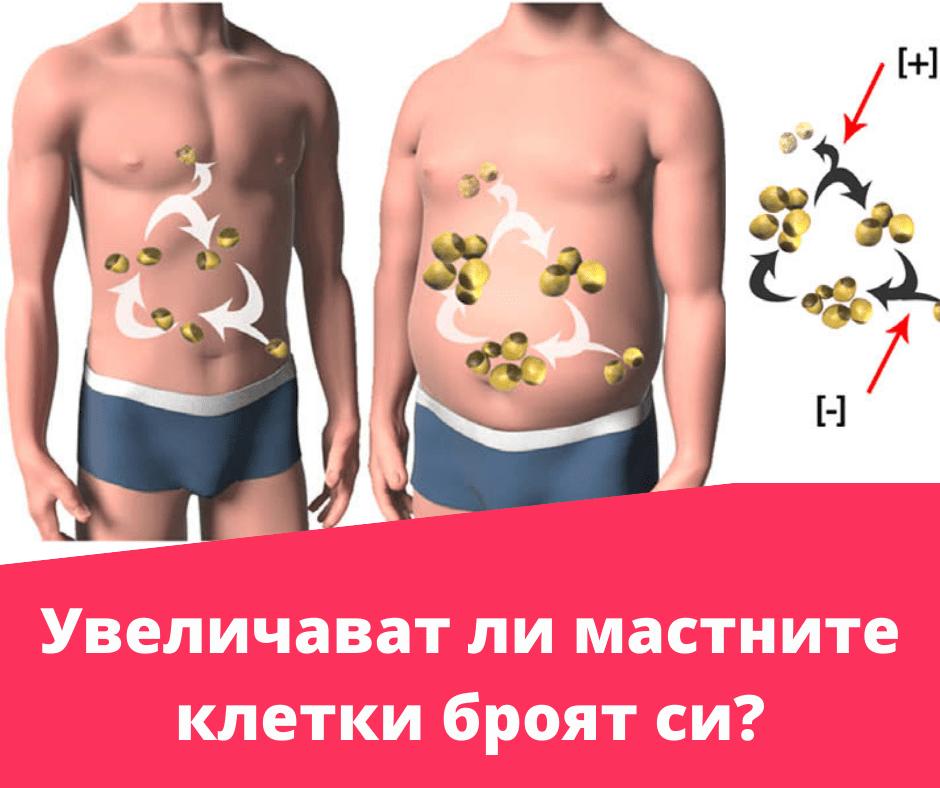 Увеличава ли се броят на мастните клетки в тялото